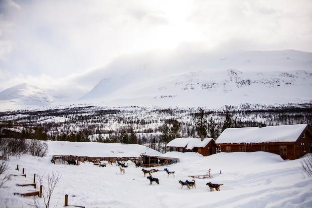 Traîneau à chiens dans les îles lofoten, norvège du nord.