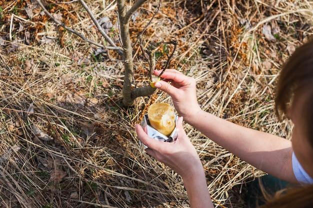Traitement des pommiers greffés au printemps