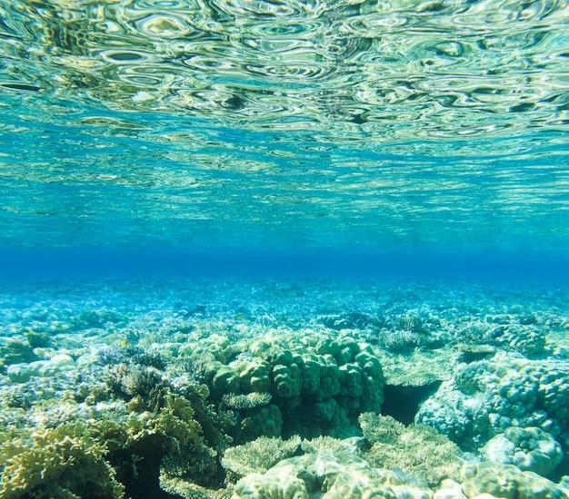 Tranquille sous l'eau