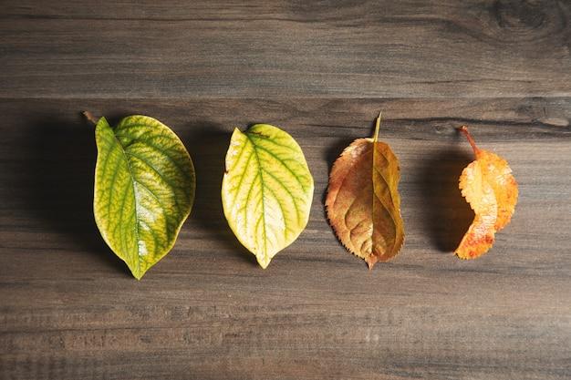 Transition de la couleur des feuilles du vert au rouge
