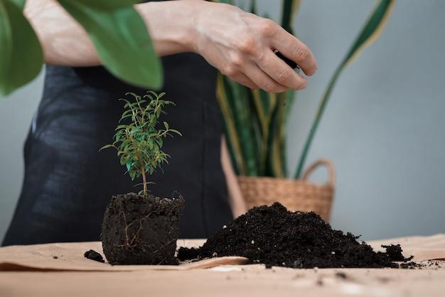 Transplanter Des Fleurs Et Des Plantes à La Maison Ou Dans Un Magasin De Fleurs Une Femme Jardinier Ou Fleuriste Entretien Des Plantes Photo Premium