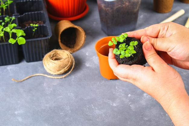 Transplanter, planter, saupoudrer des semis sur un fond de béton gris.