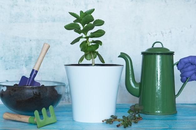 Transplanter des plantes dans un autre pot à la maison. nature morte maison pour le jardinage.
