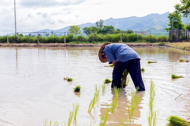 Travail des agriculteurs
