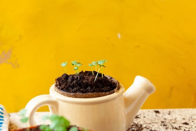 Travailler dans le jardin, planter des pots de près