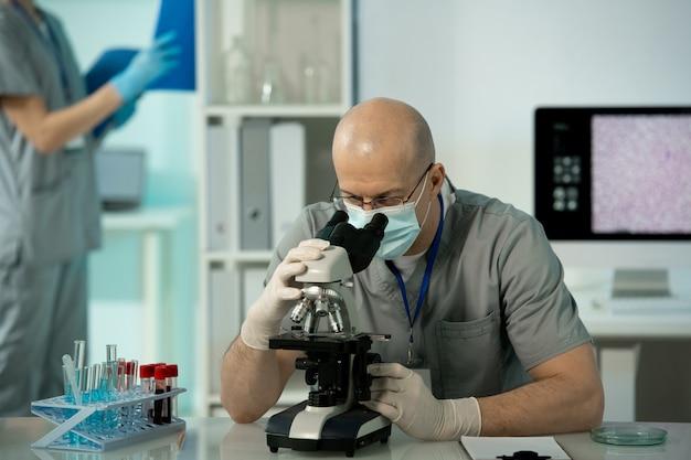 Un travailleur de laboratoire chauve concentré frotte et des gants assis à table et analysant les cellules sanguines au microscope