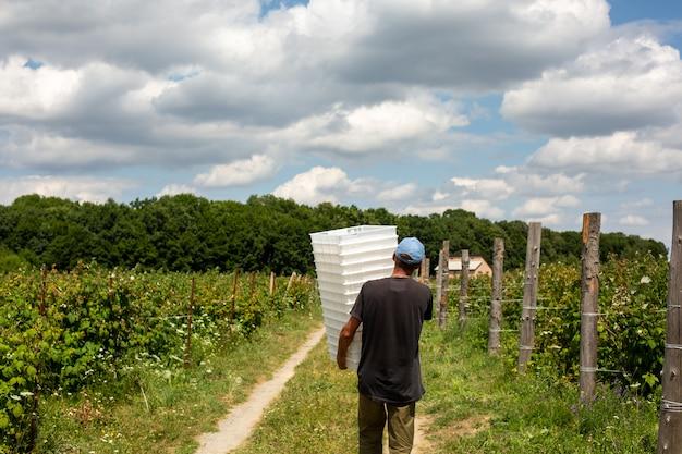 Le travailleur porte des boîtes en plastique blanc pour les baies.