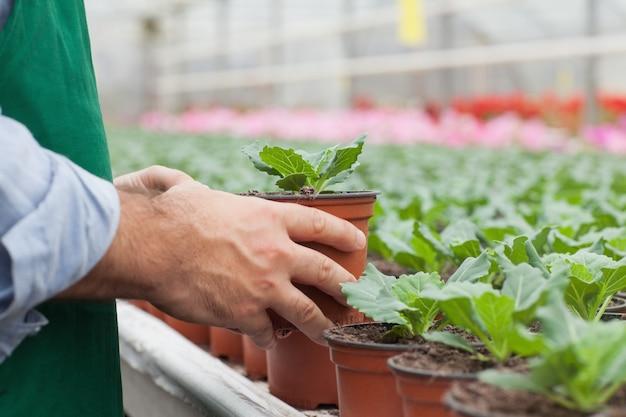 Travailleur de serre manipulant des semis