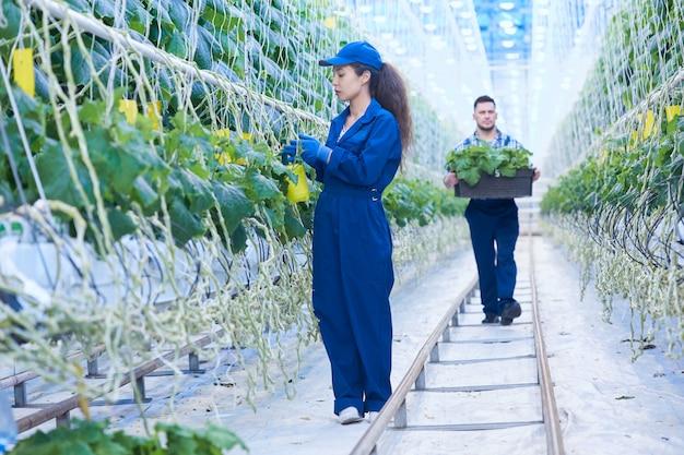 Travailleurs des plantations modernes