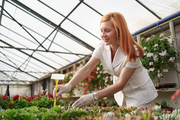 Les travailleurs surveillent la croissance et le développement des plantes succulentes à la maison verte