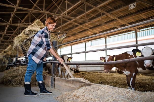 Une travailleuse avec du foin travaillant dans une ferme laitière, dans l'industrie agricole.
