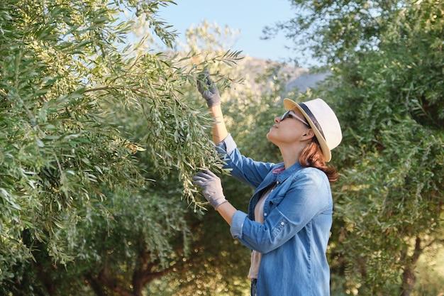 Travailleuse inspectant les oliviers dans les montagnes, eco olive farm