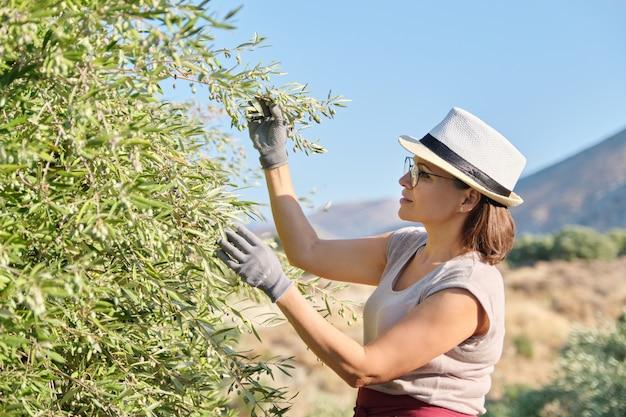 Travailleuse inspectant les oliviers dans les montagnes