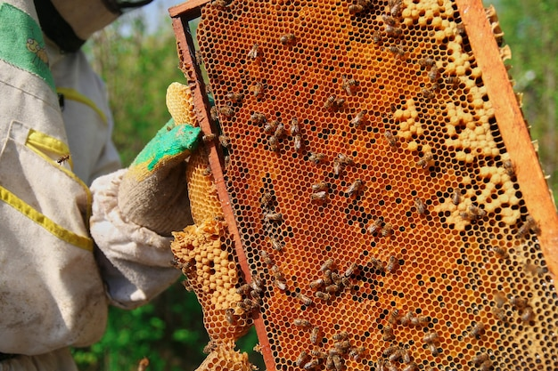 Travaillez au rucher. un apiculteur en tenue de protection et gants vérifie les ruches avec des cadres et des nids d'abeilles.