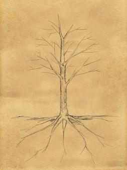 Tree sketch pas de feuilles de racine sur papier