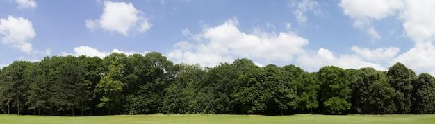 Treeline très haute définition avec un ciel bleu coloré