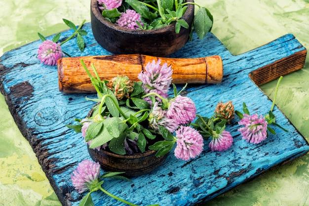 Trèfle en phytothérapie