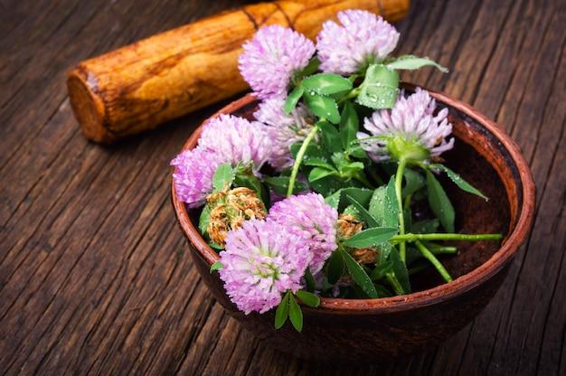 Trèfle végétal curatif
