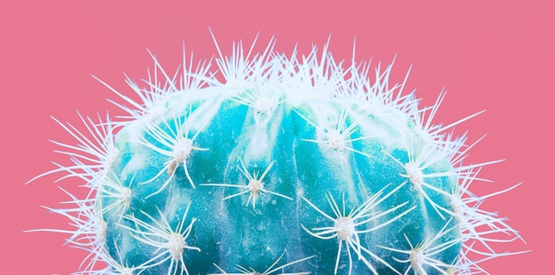 Trendy neon cactus tropical plant sur rose