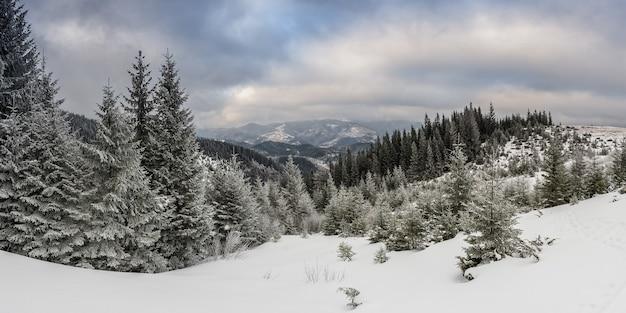 Très beau paysage d'hiver avec forêt enneigée