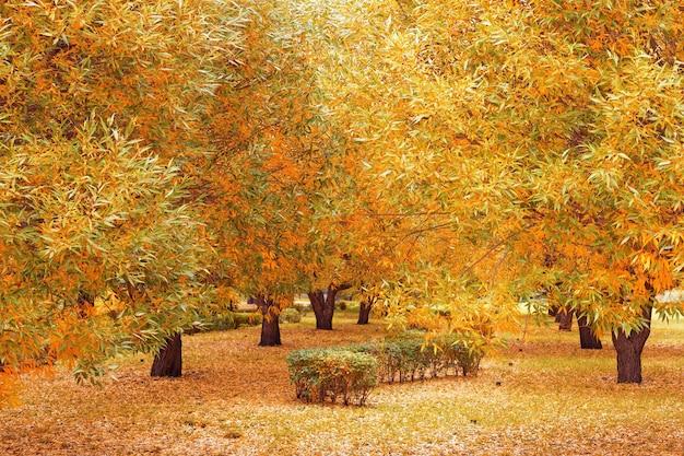 De très beaux arbres recouvrent les feuilles jaunes d'automne.
