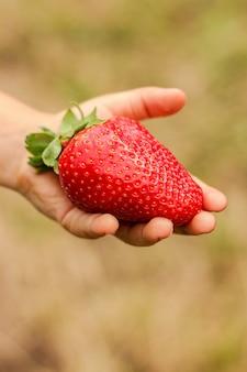 Très gros baies de fraises mûres dans la main des enfants close-up