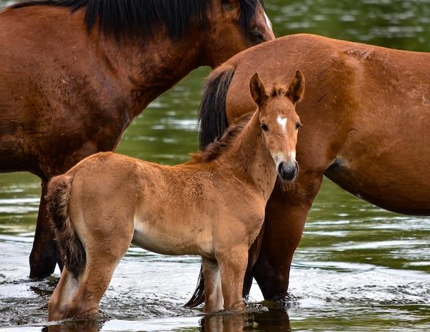 Tribu de chevaux près du lac