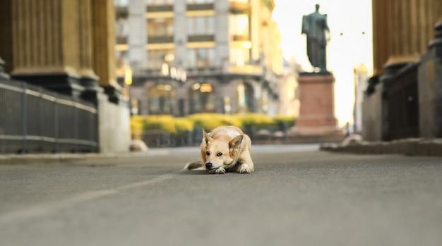 Triste petit chien de berger regardant loin et pensant en position couchée sur la route contre un monument flou