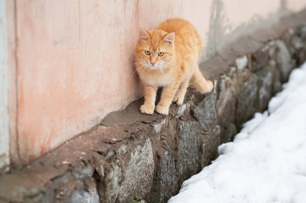 Triste rue affamée sans-abri chat droit rouge en hiver