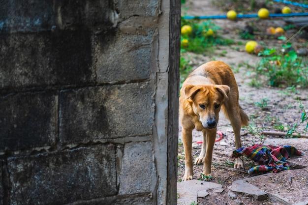 Tristesse du chien dehors la maison