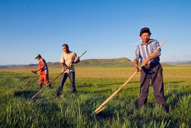 Trois agriculteurs mongols travaillant sur le terrain