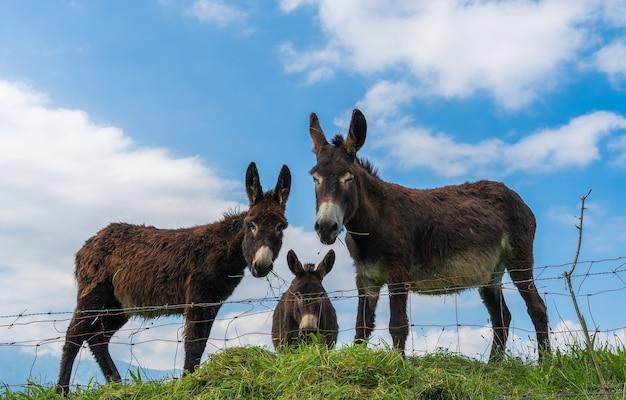 Trois ânes me regardant