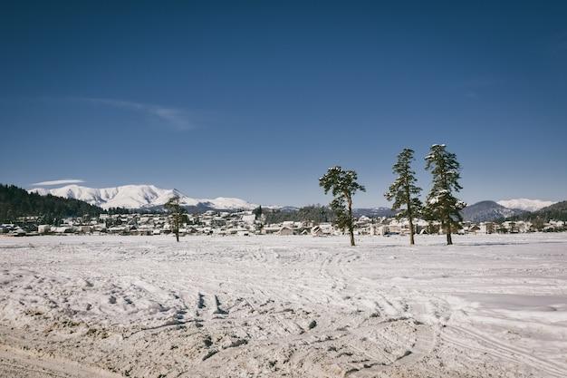 Trois arbres dans un champ enneigé