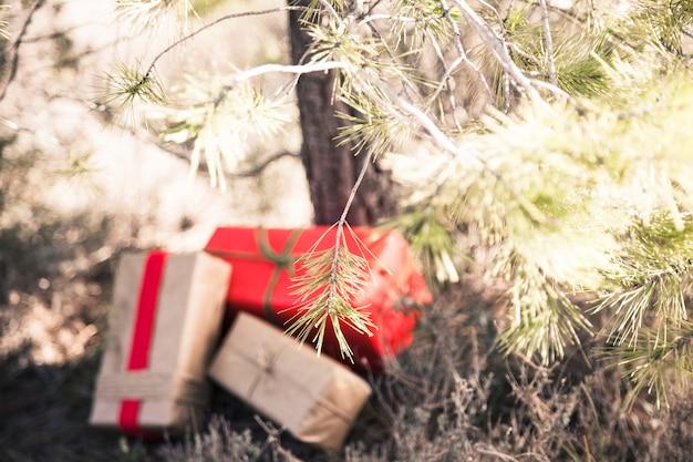 Trois boîtes à cadeaux sous l'arbre
