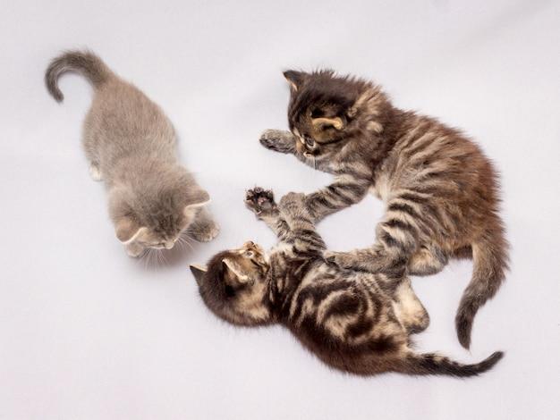 Trois chatons sont joués, la vue de dessus