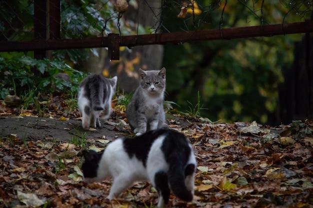 Trois chats marchent dans le parc dans l'herbe verte et les feuilles d'automne
