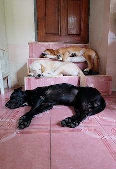 Trois chien endormi dans les escaliers