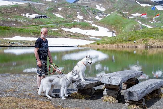 Trois chiens sont assis. un troupeau de husky sibérien.