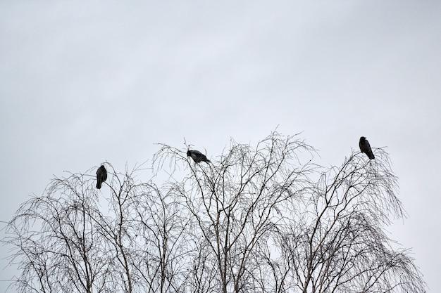Trois corbeaux assis sur des branches d'arbres. concept de troisième roue. symbolisme du numéro trois