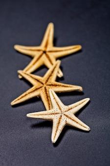Trois étoiles de mer sur fond noir.