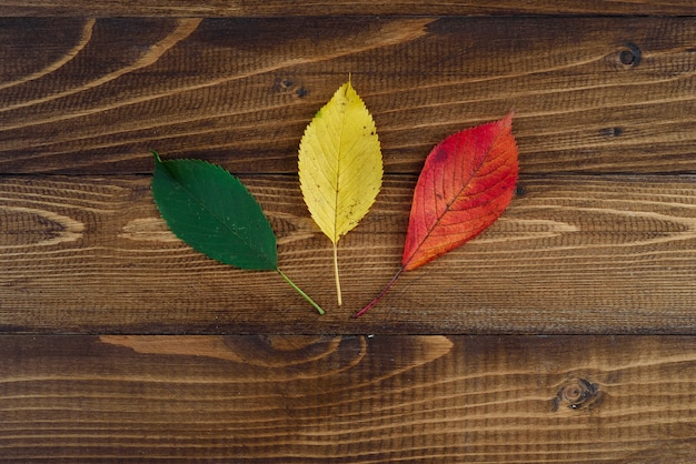 Trois feuilles d'automne vert, jaune, rouge sur fond en bois