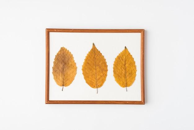 Trois feuilles dans cadre