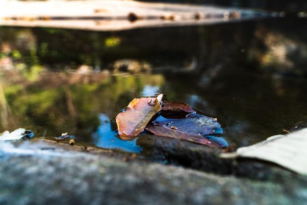 Trois feuilles dans le lac avec petite vague d'eau