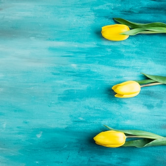 Trois fleurs de tulipes sur table