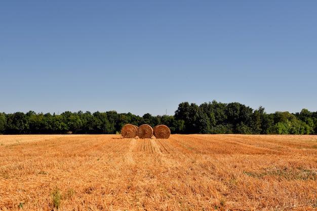 Trois foins d'herbe sèche sur un champ agricole entouré de verts sous le ciel bleu