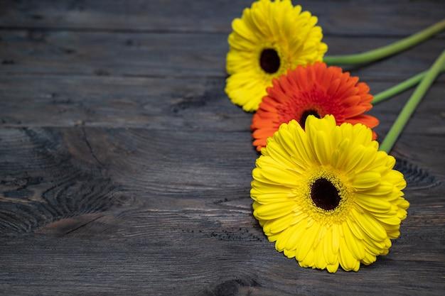 Trois gerberas sont jaunes et orange sur une table en bois sombre avec fond. belles fleurs.