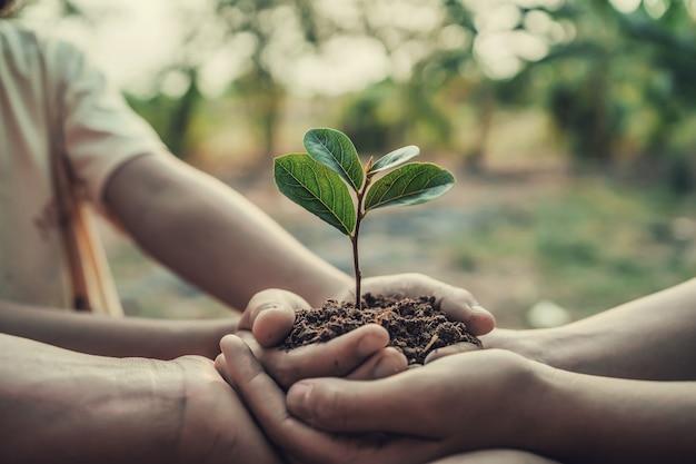 Trois mains tenant l'arbre pour la plantation. concept jour de la terre