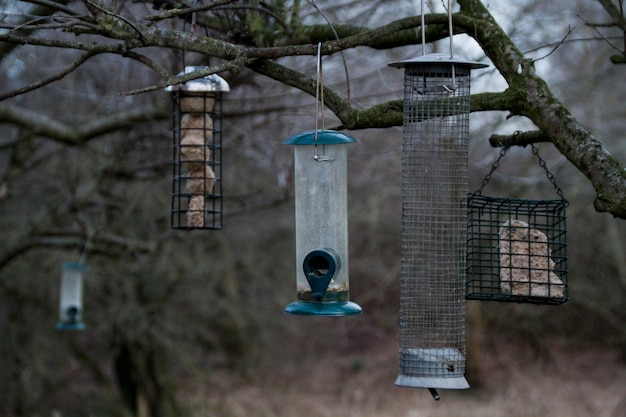 Trois mangeoires pour oiseaux