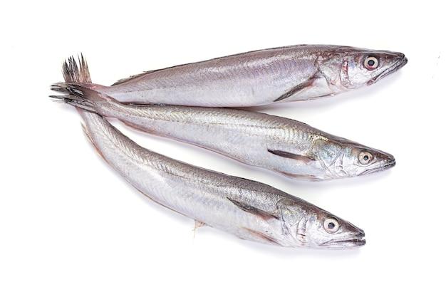 Trois merlu frais sur blanc