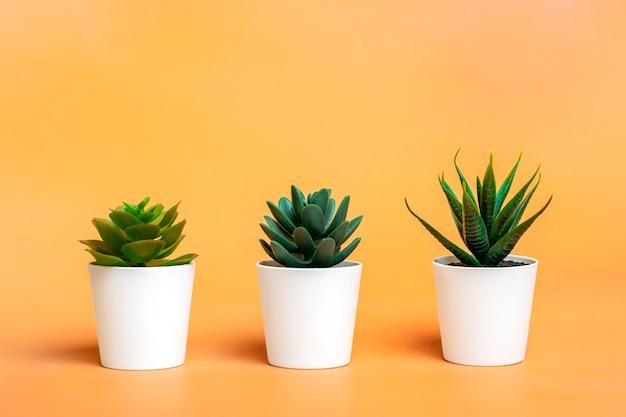 Trois mini succulentes en pot sur fond de couleur orange pastel